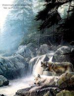 Wolves Art Wolf